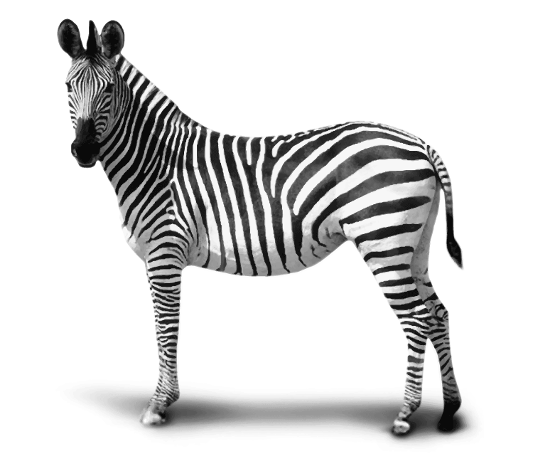 Zebra ELGRO Technology GmbH